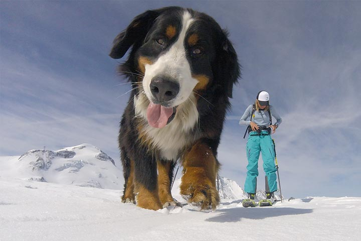Islys The Mountain Dog